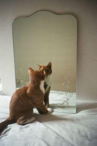 9a9877e6e5a17eeac812b1b9a8f6575c--mirror-image-mirror-mirror