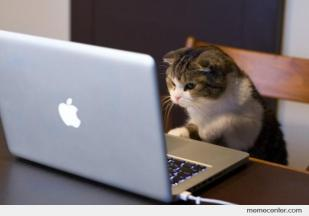 Working-cat_o_25099