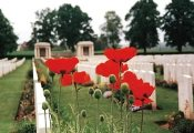 poppies-cemetry